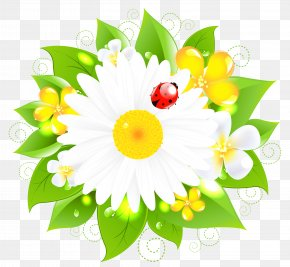 Daisy Decor Picture - Flower Stock Photography Clip Art PNG