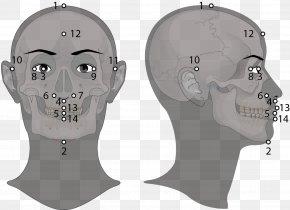 Golden Ratio Face - Jaw Skull Headgear PNG