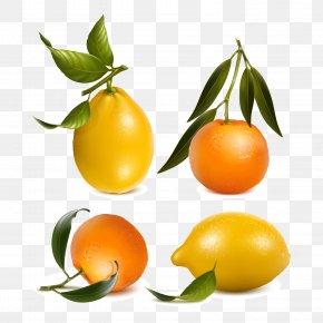 Fresh Orange And Lemon Vector Material - Juice Mandarin Orange Tangerine Lemon PNG