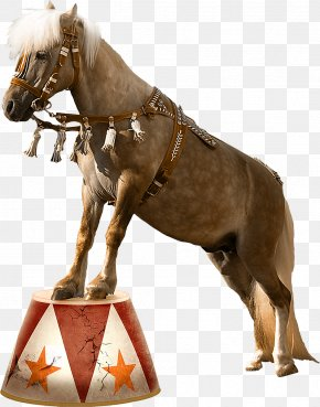 Horse - Horse Circus Clown PNG