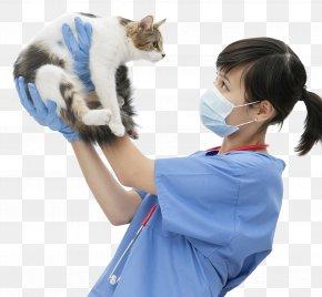 Kitten Veterinarian - Cat Kitten Dog Veterinarian Pet PNG