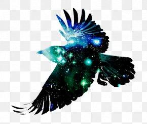 Raven - Bird Common Raven Desktop Wallpaper Crow Flight PNG