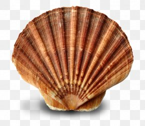 Seashell - Oyster Clam Mussel Seashell Cockle PNG