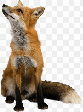 Fox Image Download Picture - Fox Clip Art PNG