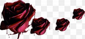 Purple Mysterious Chocolate Roses - Garden Roses Beach Rose Chocolate Flower PNG