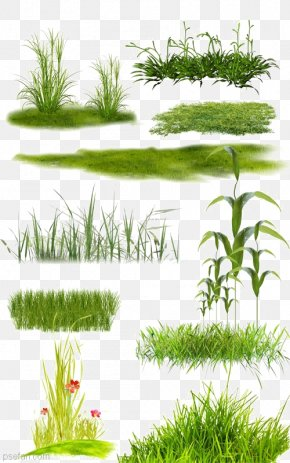 Grassland Collection - Lawn PNG
