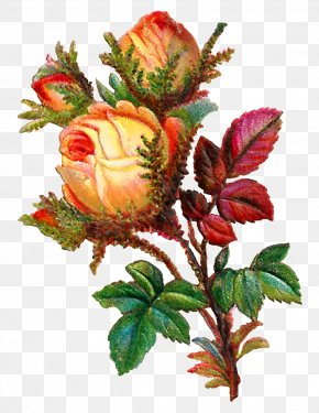 Botanical Flowers - Rose Flower Bouquet Clip Art PNG