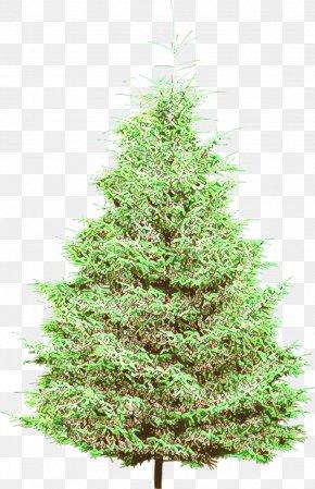 Arizona Cypress Canadian Fir - Christmas Tree PNG