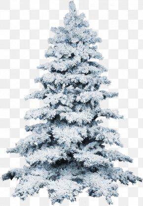 Christmas Tree - Christmas Tree Snow Wallpaper PNG