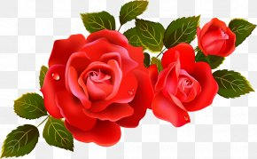 Rose Bunch Transparent Image - Rose Free Content Clip Art PNG