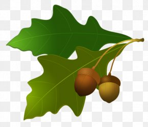 Acorn Image - Acorn Leaf Oak Clip Art PNG