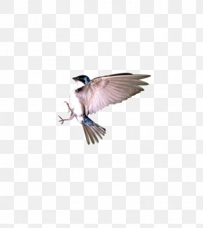Sparrow In Flight - Bird Flight Sparrow PNG