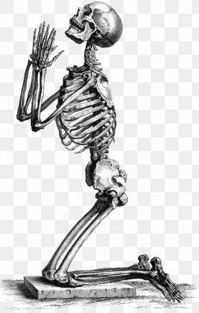 Skeleton - Human Skeleton The Anatomy Of The Human Body Skull PNG