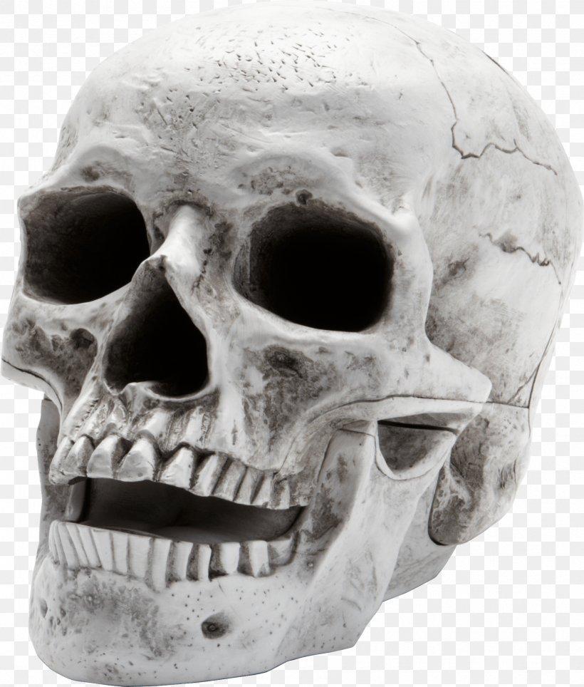 Skull Wallpaper Png 1795x2111px Human Skeleton Anatomy Black