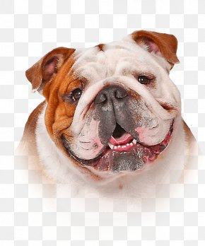 Bulldog - Shampoo Dog Hair Conditioner Oatmeal Skin PNG