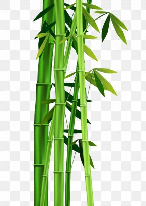 Bamboo Leaves - Bamboo Clip Art PNG