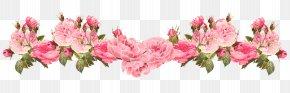 Rose - Borders And Frames Floral Design Rose Clip Art Flower PNG