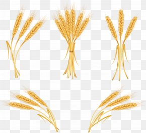 Wheat - Wheat Euclidean Vector Royalty-free Clip Art PNG