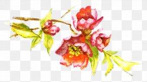 Plant Spring Framework - Floral Spring Flowers PNG