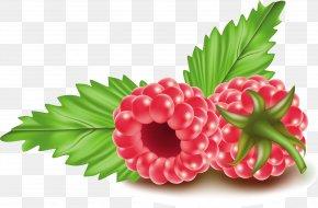 Hand-painted Raspberry - Frutti Di Bosco Red Raspberry Clip Art PNG