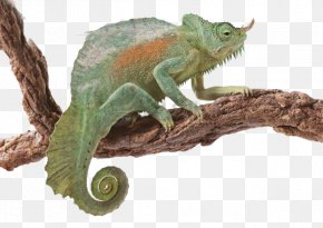 Free Buckle Chameleon - Thinking In Java Thinking In C++, Volume 2: Practical Programming PNG