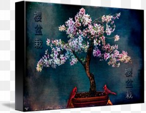 Cherry Blossom - Cherry Blossom Still Life Art Bonsai PNG