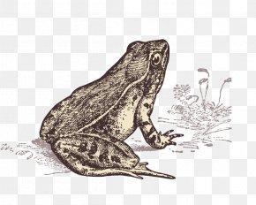 Hand Painted Frog Line Material - Frog Les Dictons De Ma Grenouille: ...au Fil Des Saisons Toad PNG