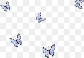 May Background Butterfly - Butterfly Borboleta Insect M / 0d Painting PNG