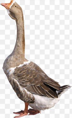 Goose Image - Goose Duck Clip Art PNG