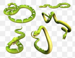 Snake Image Picture Download - Smooth Green Snake Download Clip Art PNG