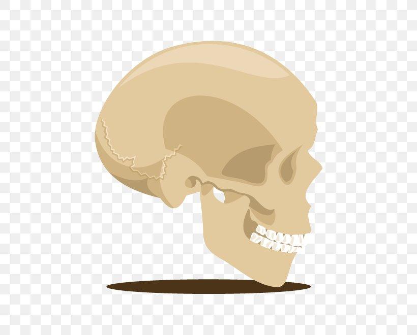 Skull Skeleton U9ab7u9ac5 Head, PNG, 660x660px, Skull, Bone, Cartoon, Ear, Head Download Free