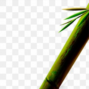Bamboo - Designer Computer File PNG