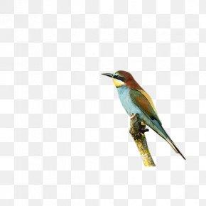 Animal Bird Branch - Bird Animal Download PNG