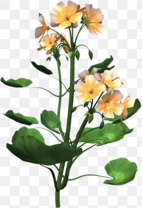 Plant - Plant Anatomy Flower Clip Art PNG