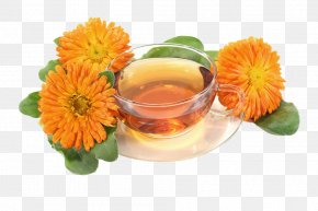 Marigold And Tea-free Material - Tea Mexican Marigold Calendula Officinalis Flower PNG