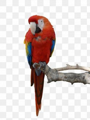 Parrot Hd - Parrot Blue-and-yellow Macaw Bird PNG