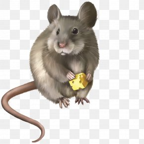 Cheese-eating Rat - Rat Mouse Rodent Clip Art PNG