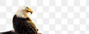 Eagle - Bald Eagle Bird Stock Photography Beak PNG