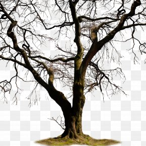 Pictures Of Dead Trees - Twig Trunk Tree Clip Art PNG