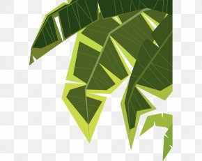 Green Palm Leaves - Cartoon Illustration PNG