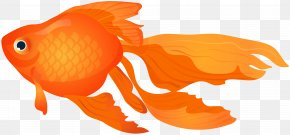 Goldfish Transparent Clip Art Image - Goldfish Clip Art PNG