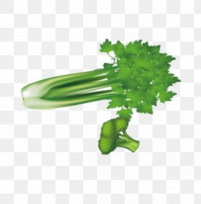 Green Vegetables, Celery And Broccoli - Leaf Vegetable Broccoli Celery U7dd1u9ec4u8272u91ceu83dc PNG