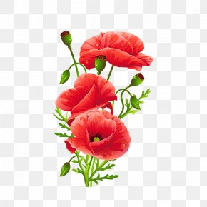 Hand Painted Watercolor Red Floral Decoration Pattern - Common Poppy Flower Red PNG
