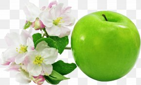 Green Apple Image - Apple Icon Image Format Clip Art PNG
