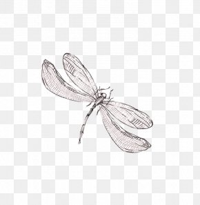 Sen Department Of Fresh And Beautiful Hand-painted Dragonfly - Dragonfly Graphic Design PNG