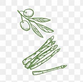 Plant - Plant Euclidean Vector PNG