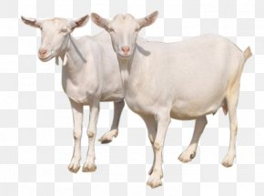 Mother Goat - Goat Sheep Milk Cattle PNG