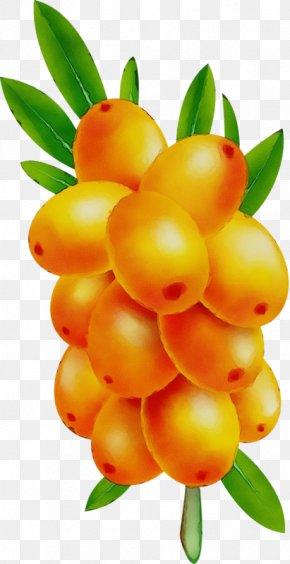 Fruit Tree Hippophae - Fruit Tree PNG