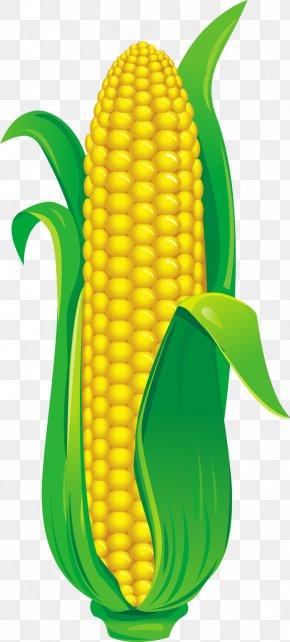 Grado - Corn On The Cob Vector Graphics Illustration PNG