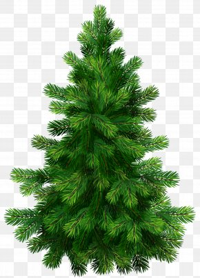 Transparent Pine Tree Clipart Picture - Pine Tree Clip Art PNG
